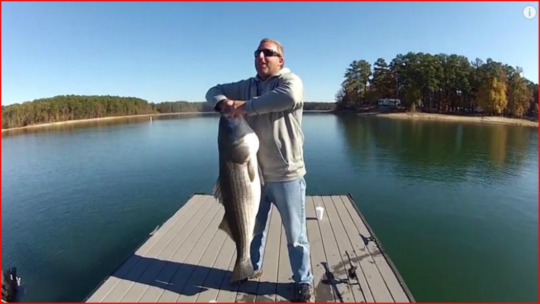 Citation fish adventure nature writing tom sullivan for Lake gaston fishing report