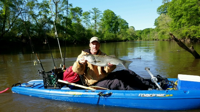 Neuse river striped bass adventure nature writing tom for Neuse river fishing